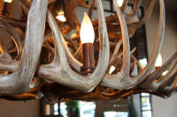 closeup of whitetail chandelier